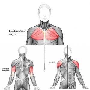 pushmuscle.png